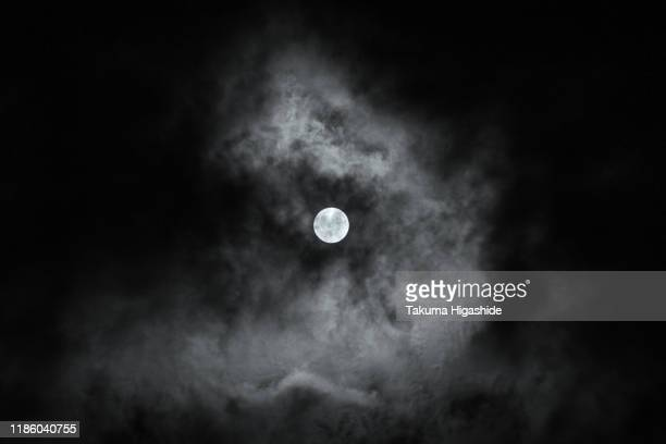 in the moonlight - month stock pictures, royalty-free photos & images