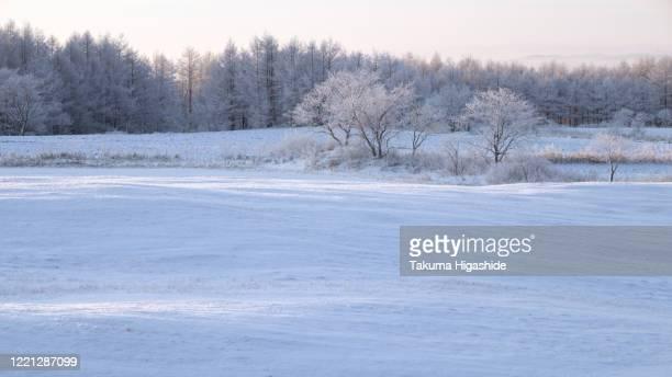 in the morning light - 深い雪 ストックフォトと画像