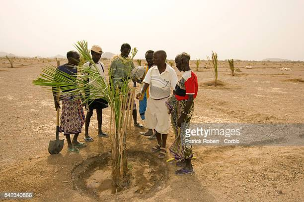 In the Obock region, peasants inspect a young palm tree. Since 2005, the Djibouti government has emphasised the importance of a project for...