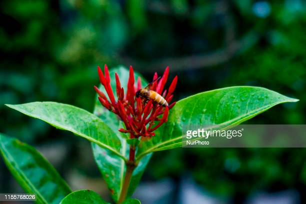 In the rainy season nature become green and colorful in Dhaka, Bangladesh, on 15 July 2019. Small creature like bees and butterflies collect honey...