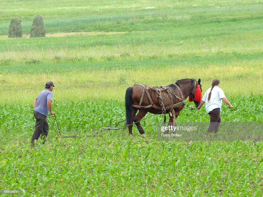 Teamwork in agriculture : Nieuwsfoto's