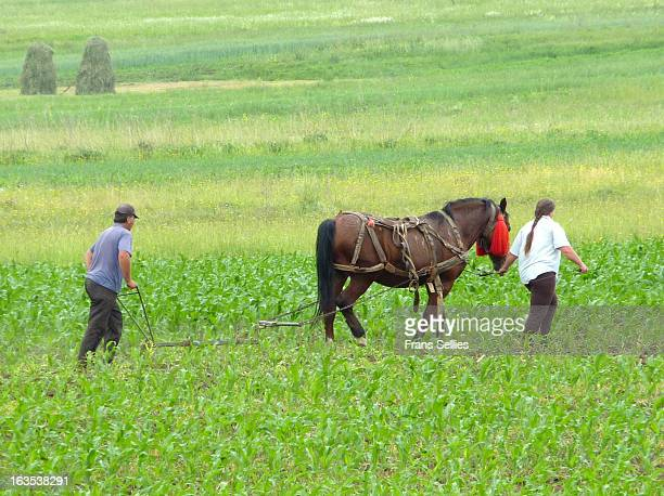 In the Romanian countryside ploughing with animals is still a common sight.This is real teamwork. Husband and wife and the horse are the team.
