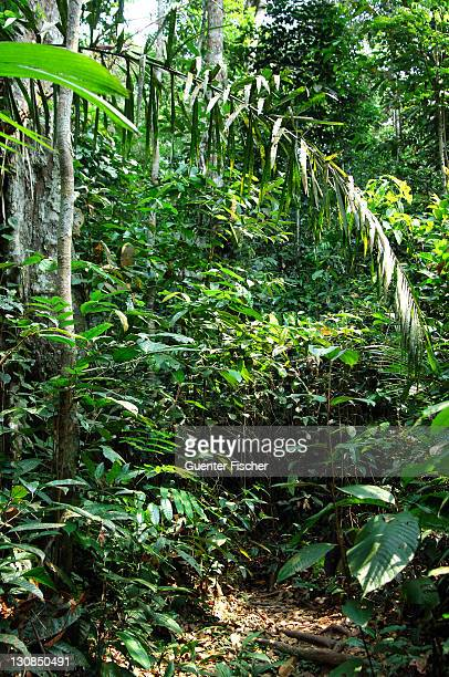 In the tropical rain forest Amazonia Brazil