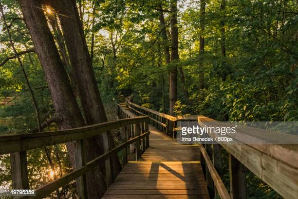 in the woods - mississauga stock pictures, royalty-free photos & images
