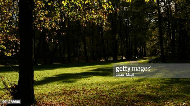 in the woods - laura woods stock pictures, royalty-free photos & images