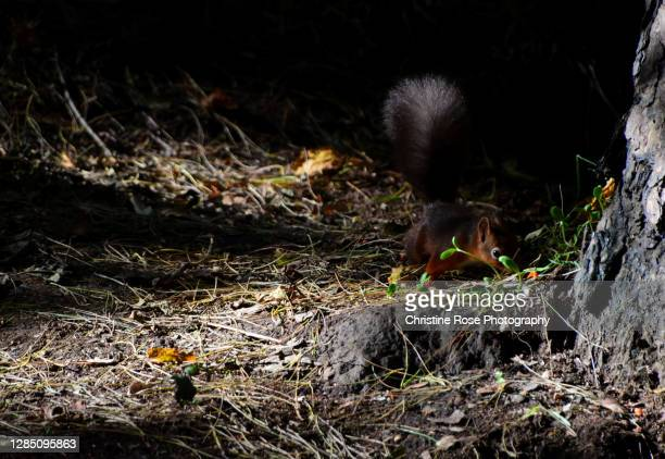 in the woods with the squirrels - fanny pic stock pictures, royalty-free photos & images