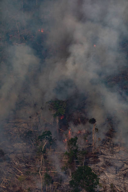 BRA: Record Number Of Fires Torch Brazil's Amazon Forest
