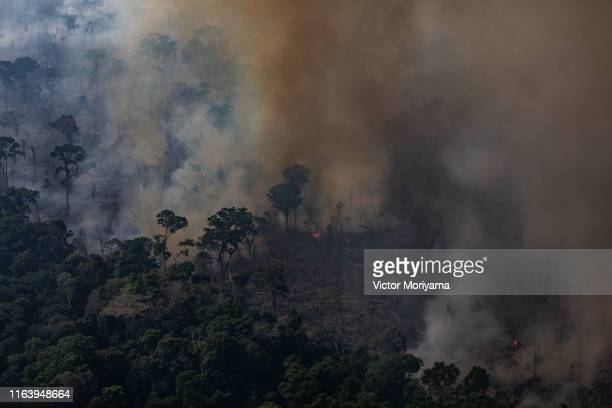 In this aerial image a fire burns in a section of the Amazon rain forest on August 25 2019 in the Candeias do Jamari region near Porto Velho Brazil...