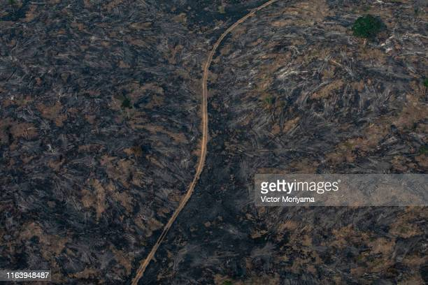 In this aerial image A section of the Amazon rain forest that has been decimated by wild fires on August 25 2019 in the Candeias do Jamari region...