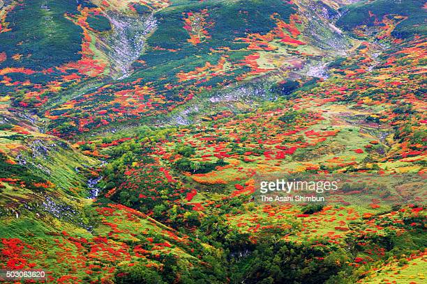 In this aerial image autumn colours are seen near Mount Daisetsuzan on September 18 2006 in Higashikawa Hokkaido Japan