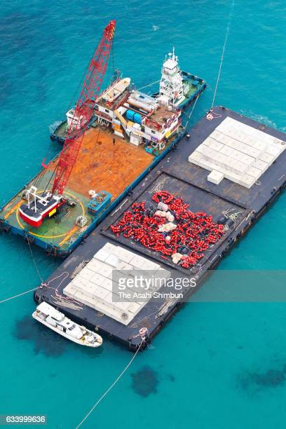 In this aerial image construction barges carrying concrete blocks are anchored off the Henoko district to begin construction work for the relocation...