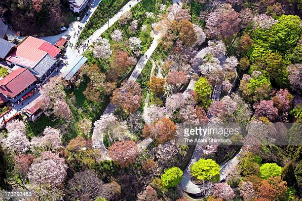 In this aerial image Fully bloomed cherry blossoms are seen at Mount Yoshino on April 19 2012 in Yoshino Nara Japan