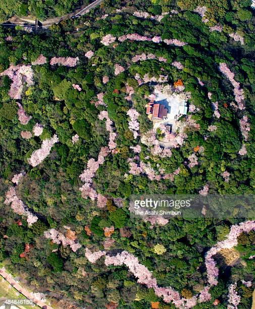 In this aerial image, fully bloomed cherry blossoms form a spiral at Konpira san in the Chuo Park on March 31, 2009 in Kitakyushu, Fukuoka, Japan....