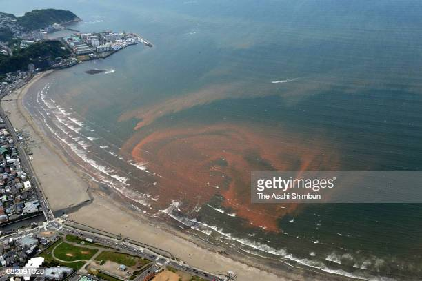 In this aerial image red tide is observed in waters off Yuigahama beach on May 6 2017 in Kamakura Kanagawa Japan Red tide is triggered by the...