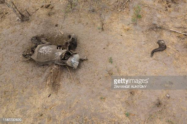 In this aerial photograph a carcass of an elephant that succumbed to drought is seen in the Hwange National Park, in Zimbabwe, on November 12, 2019....