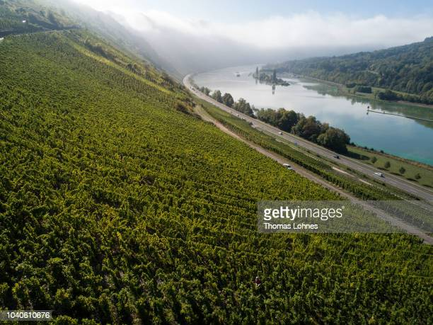 In this aerial Riesling wine grapes stand in the morning sund with the Mosel river on September 25, 2018 near Enkirch, Germany. Germany experienced...
