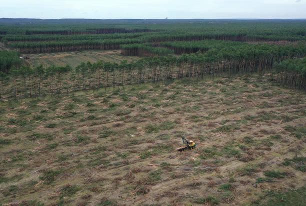 DEU: Environmentalists Seek To Block Tesla From Factory Site Deforestation