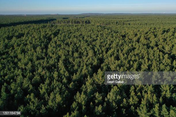 In this aerial view trees stand on the forest property where US automaker Tesla is to build a new Gigafactory on January 21, 2020 near Gruenheide,...