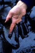 In this april 21 1989 file photograph a hand drips with oil that has picture id112909138?s=170x170