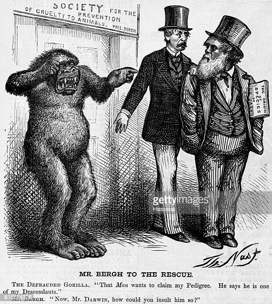 In this cartoon the gorilla says That man wants to claim my pedigree He says he is one of my descendants Mr Bergh replies Now Mr Darwin how could you...