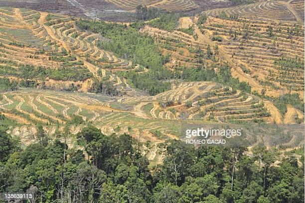 In this file aerial photograph taken on July 6 a forest land is seen cleared as palm oil plantation concession expands in West Kalimantan province on...