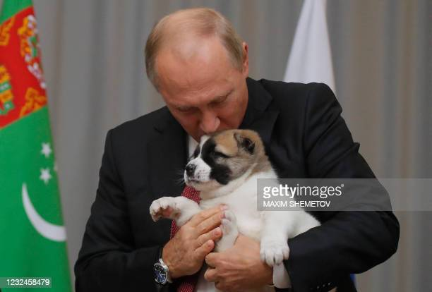 In this file photo taken on October 11, 2017 Russian President Vladimir Putin kisses a Turkmen shepherd dog, locally known as Alabai, received by...