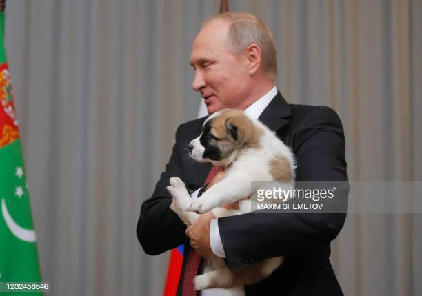 In this file photo taken on October 11, 2017 Russian President Vladimir Putin holds a Turkmen shepherd dog, locally known as Alabai, received by the...