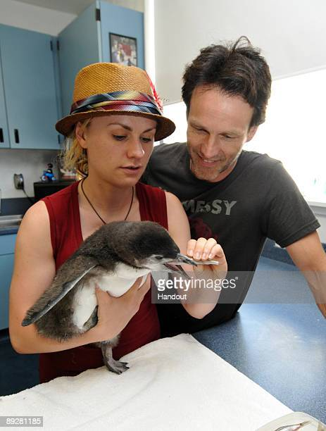 In this handout from SeaWorld San Diego 'True Blood' costars Anna Paquin and Stephen Moyer hold a twomonthold Magellanic penguin chick at SeaWorld...