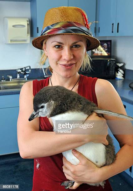 In this handout from SeaWorld San Diego 'True Blood' star Anna Paquin holds a twomonthold Magellanic penguin chick at SeaWorld San Diego's Penguin...