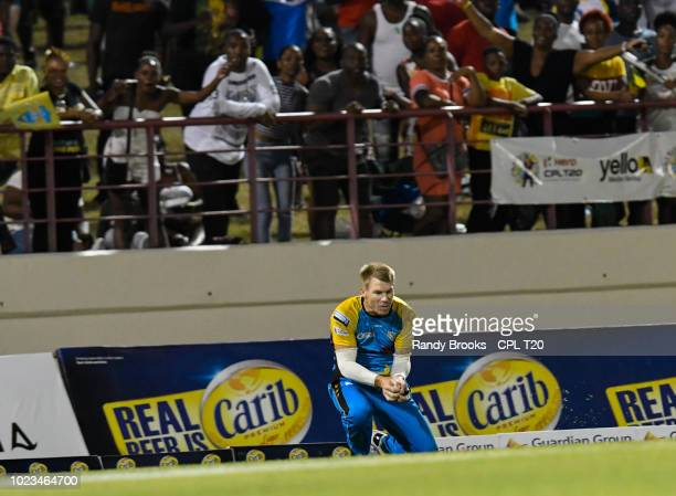 In this handout image provided by CPL T20 David Warner of St Lucia Stars takes the catch to dismiss Rovman Powell of Jamaica Tallawahs during match...