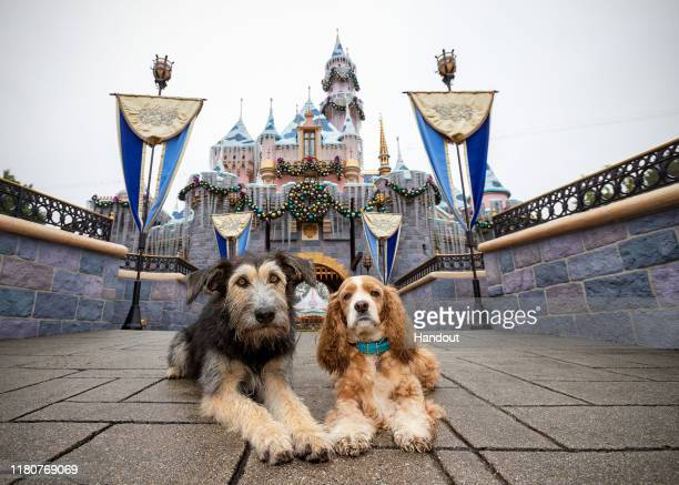 In this handout image provided by Disneyland Resort the stars of the upcoming liveaction film Lady and the Tramp Monte and Rose pose in front of...