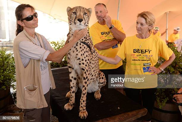 In this handout image provided by Philip Brown Sir Ian Botham and Lady Botham meet a cheetah after the Stellenbosch walk during the 'Beefy Walking...