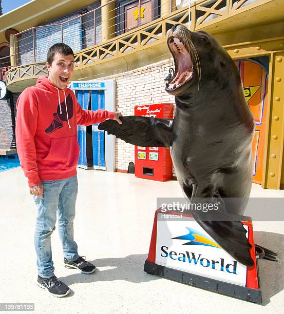 In this handout image provided by SeaWorld San Diego SeaWorld San Diego's star sea lion Clyde has a 'flipper shake' with alternative rocker Frank...