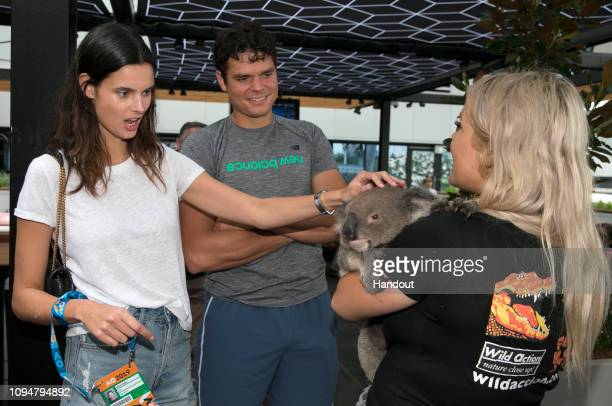 In this handout image provided by Tennis Australia Milos Raonic of Canada and Camille Ringoir pats a Koala during day three of the 2019 Australian...