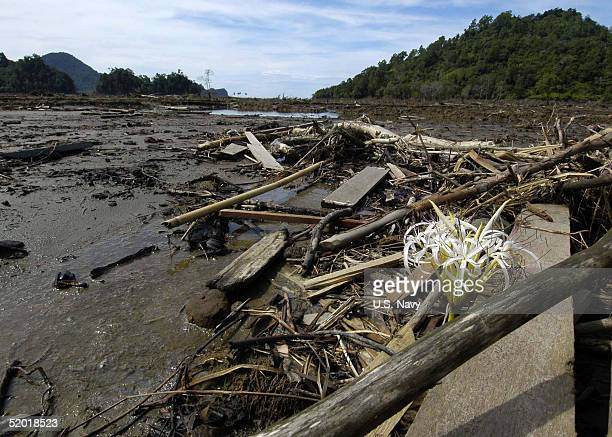 In this handout image provided by the US Navy debris lies along a small valley January 17 2005 in the region of Glebruk on the island of Sumatra...