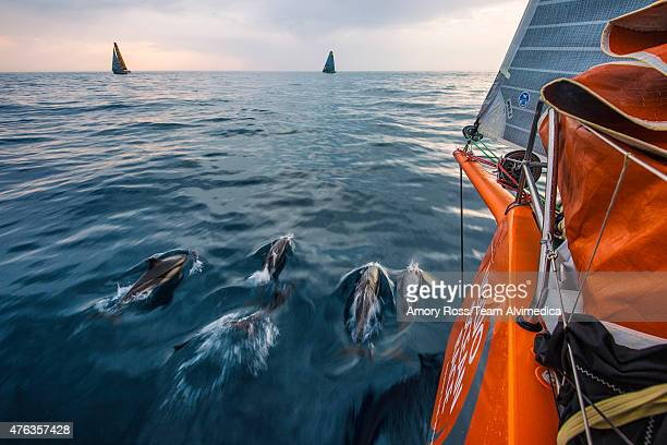 In this handout image provided by the Volvo Ocean Race onboard Team Alvimedica A group of Portuguese dolphin blow off some early morning energy in...