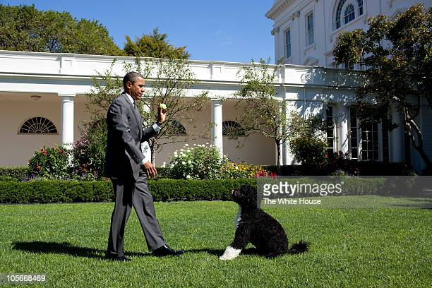 In this handout image provided by the White House, U.S. President Barack Obama throws a ball for Bo, the family dog, in the Rose Garden of the White...