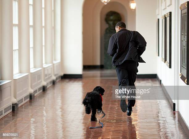 In this handout image released by the White House on April 13 US President Barack Obama runs down a corridor with the family's new dog Bo a sixmonth...