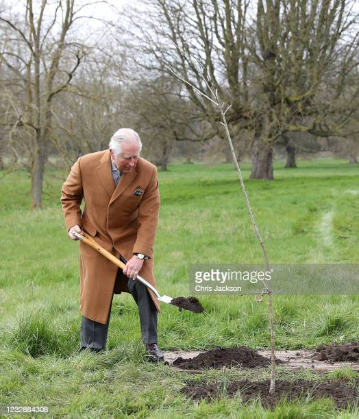 In this handout image released on May 17, 2021 Prince Charles, Prince of Wales plants the first Jubilee tree in the grounds of Windsor Castle earlier...