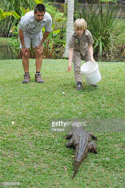 In this handout photo provided by Australia Zoo Robert Irwin feeds a freshwater crocodiles with Australia Zoo's Head of Reptiles Josh Ruffell at...