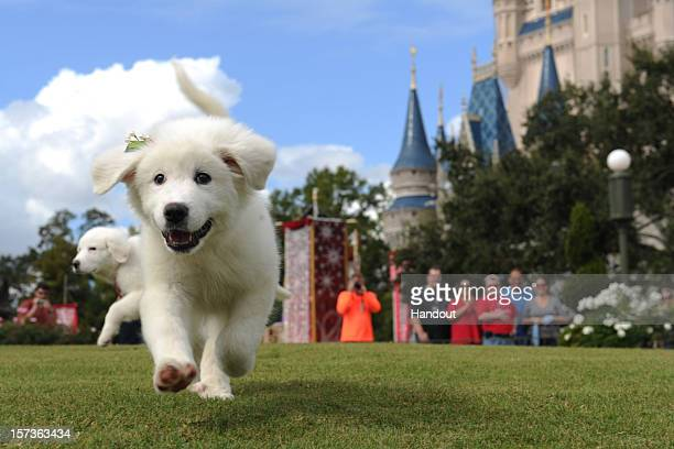 In this handout photo provided by Disney canine stars from Disney's new holiday DVD and Bluray film Santa Paws 2 The Santa Pups take a stroll in the...