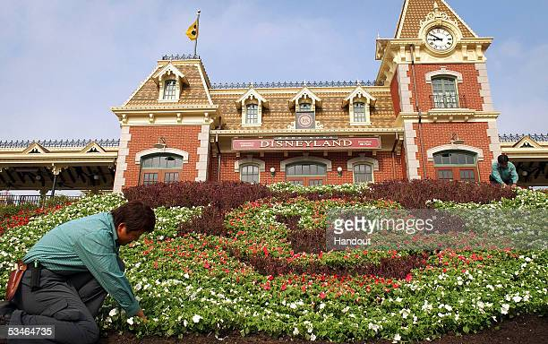 In this Handout photo provided by Disney horticultural cast members Tina Tan and Ojon Siu plant flowers in the shape of Mickey Mouse at the entrance...
