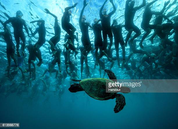 In this handout photo provided by IRONMAN The green sea turtle also known as 'Honu' is a symbol of good luck and longevity in Hawaiian lore This...