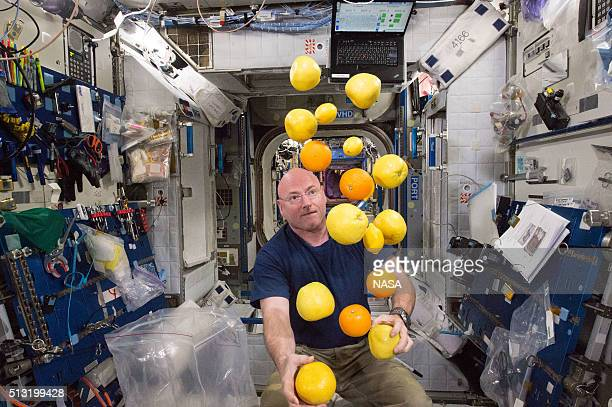 In this handout photo provided by NASA NASA astronaut Scott Kelly corrals the supply of fresh fruit that arrived on the Kounotori 5 HII Transfer...