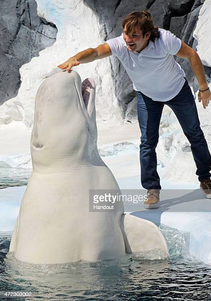 In this handout photo provided by SeaWorld San Diego Actor impressionist and social media sensation Jamie Costa met Ferdinand a male beluga whale at...