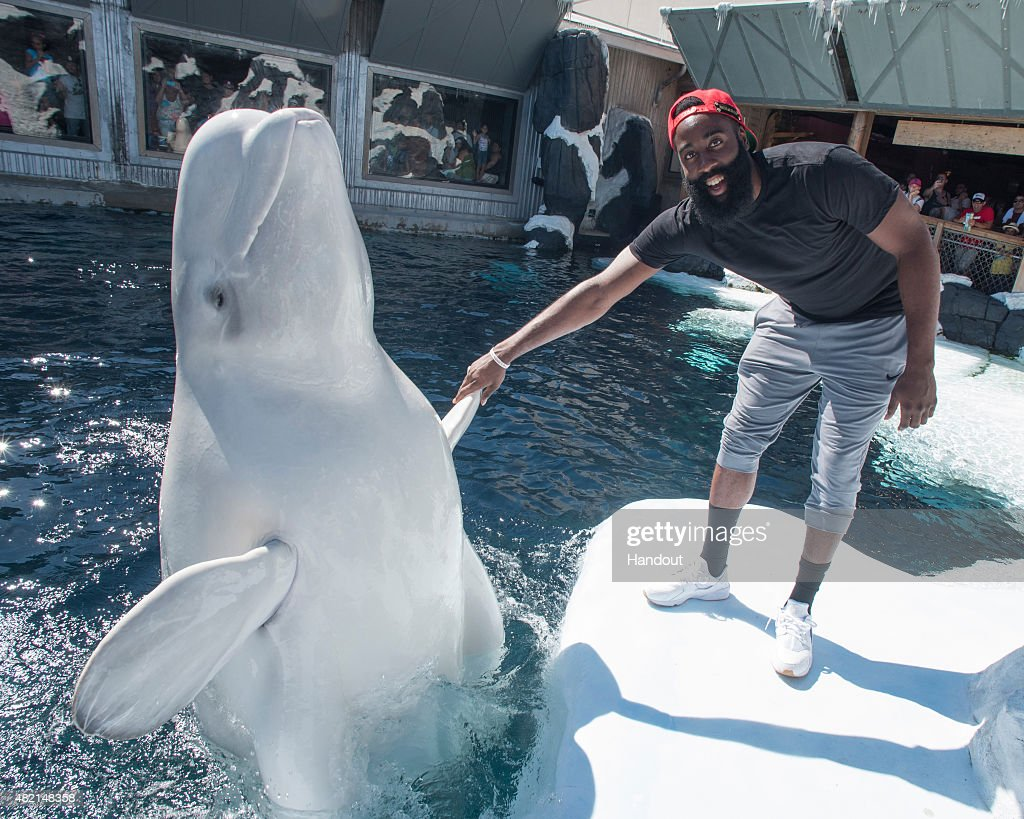 James Harden Visits SeaWorld San Diego