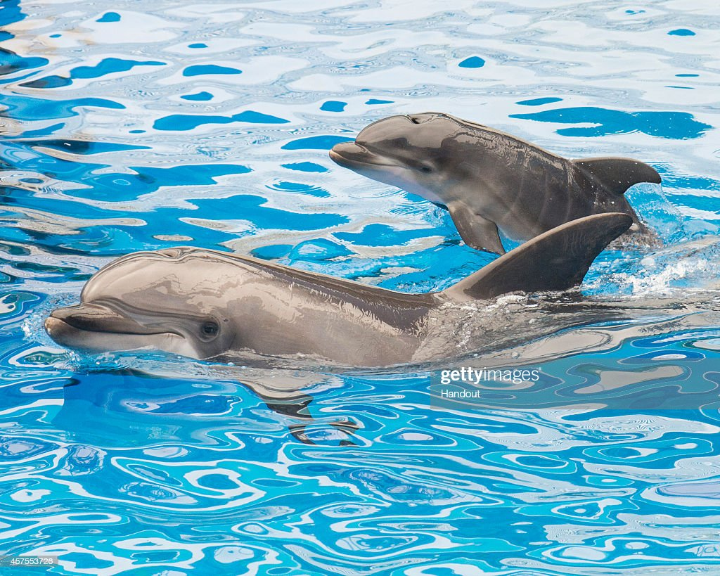 Dolphin Calf Born At SeaWorld San Diego : News Photo