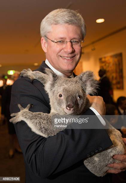 In this handout photo provided by the G20 Australia Canada's Prime Minister Stephen Harper cuddles Jimbelung the koala before the start of the first...