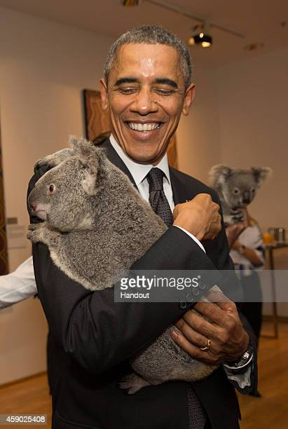 In this handout photo provided by the G20 Australia United States' President Barack Obama cuddles Jimbelung the koala before the start of the first...
