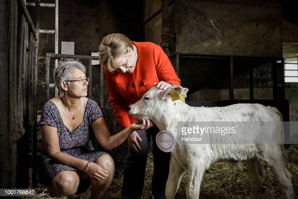 In this handout photo provided by the German Government Press Office German Chancellor Angela Merkel names a calf which was born today 'Wirbelwind'...
